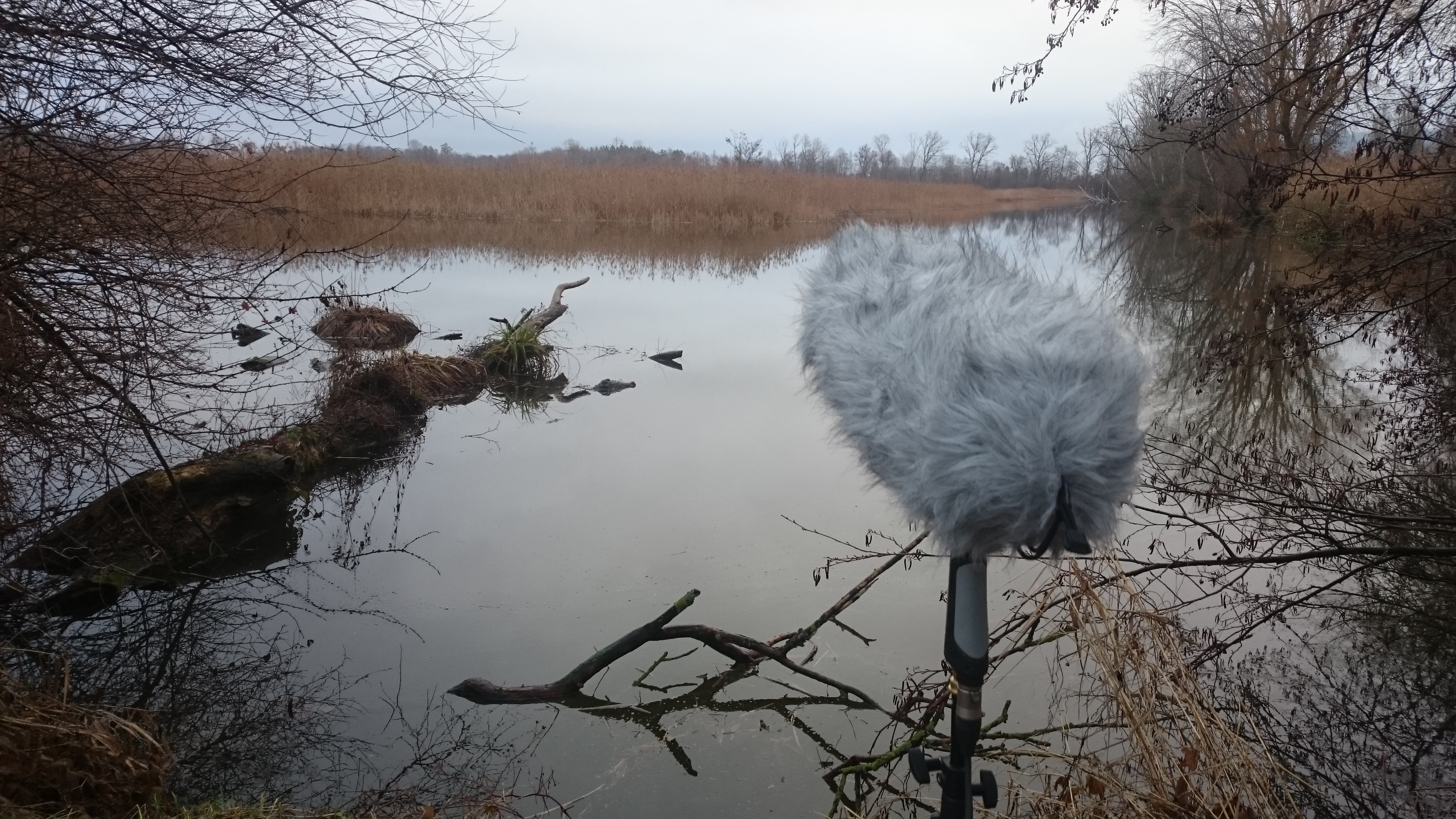 Fieldrecording_Fanel_2018.JPG